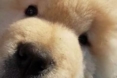 addestramento-cucciolo-2-FILEminimizer