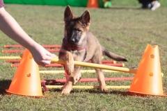 puppy-class-2-FILEminimizer