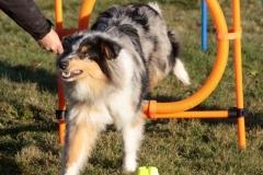 puppy-class-4-FILEminimizer