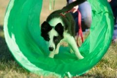 puppy-class-5-FILEminimizer