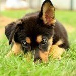posso far uscire il cucciolo se non ha finito i vaccini