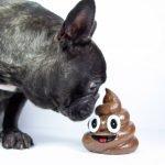 perchè il cane mangia la cacca e come farlo smettere