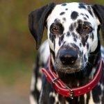 Il collare migliore è quello GIUSTO per te e il tuo Cane!