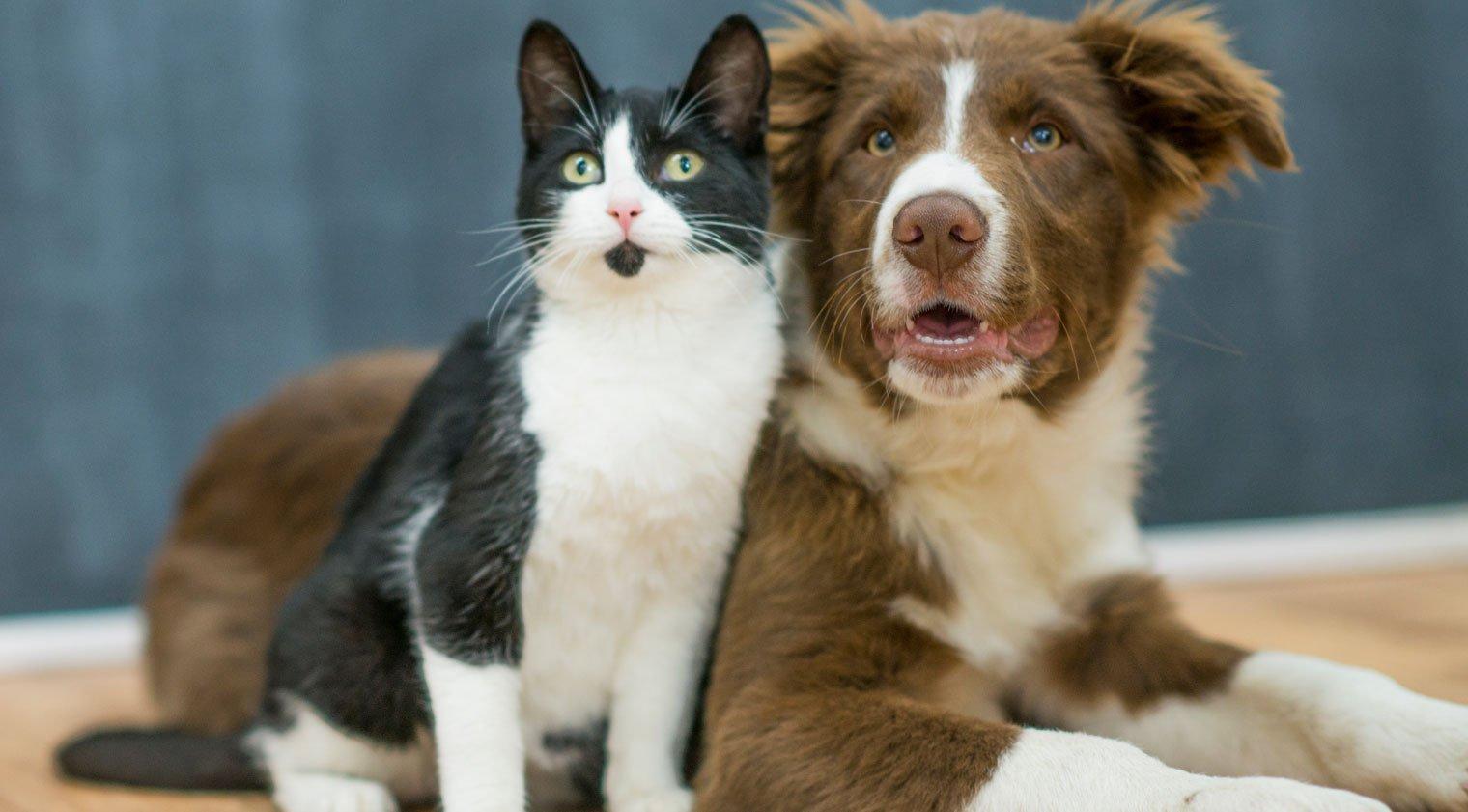 I migliori Consigli li trovi solo nel Blog PlayDog&Cat