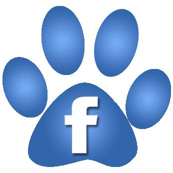 playdogandcat gruppo facebook