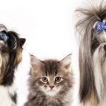 consulenza toelettatura cane e gatto