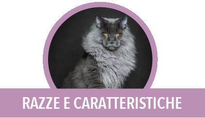 razze e caratteristiche gatto