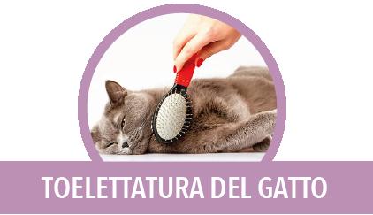 toelettatura del gatto