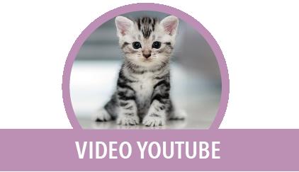 video youtube gatto