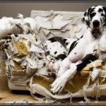cane distrugge casa