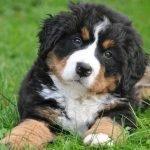 crescere-un-cucciolo