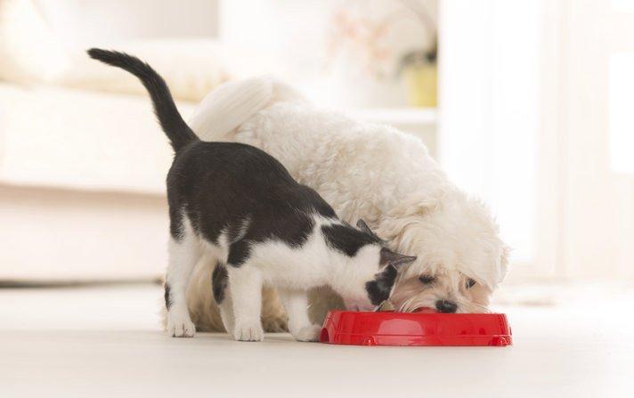 Crocchette per Cani e Gatti migliori