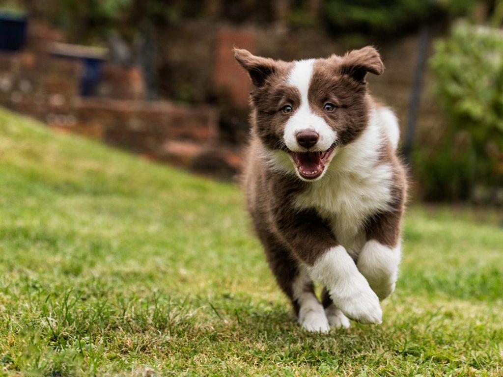 educare un cucciolo, facile se sai come farlo