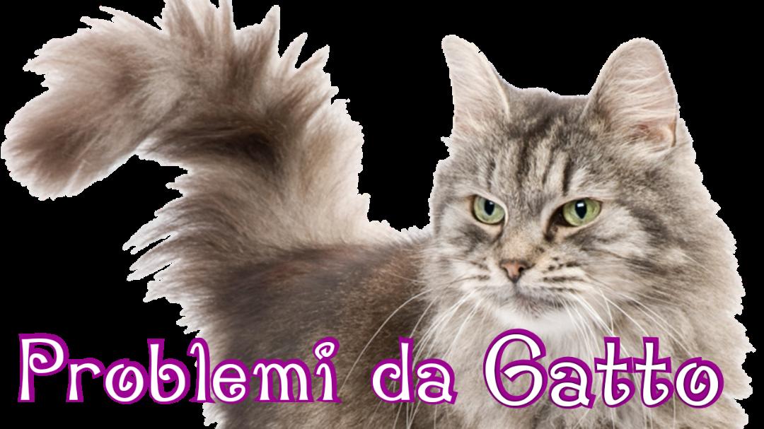 Problemi di Comportamento del Gatto
