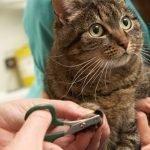 tagliare le unghie a gatto e cane