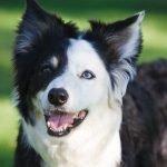 come capire se hai un cane di razza