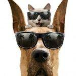 come proteggere cane e gatto dal caldo