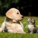sintomi del caldo nel cane e nel gatto