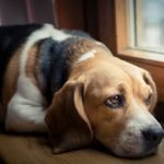 ansia da separazione nel cane