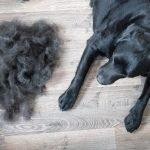 cane-perde-pelo