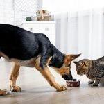 inappetenza nel cane e nel gatto