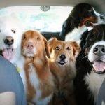 viaggiare in auto con cane e gatto