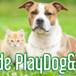 Guide Cane e Gatto PlayDog&Cat