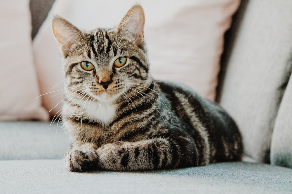 rimedi naturali contro lo stress nel gatto