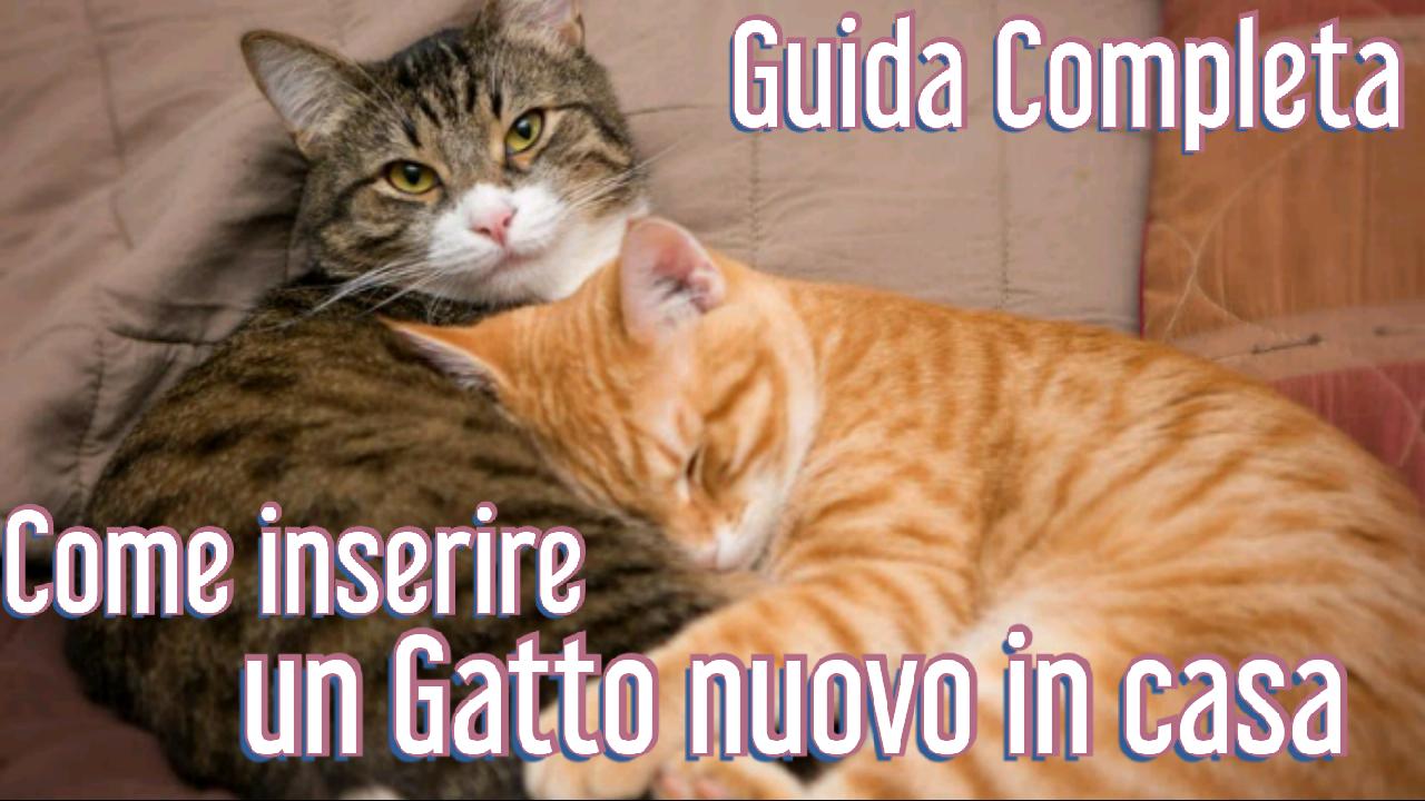 """Guida Completa """"Come inserire un Gatto nuovo in casa"""""""