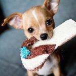 Consulenza Addestramento Cani a Distanza in tutta Italia