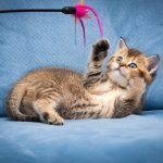 Giocare con il Gatto