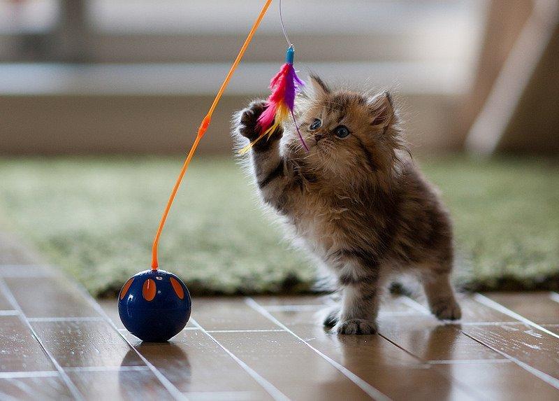 Giocare cpn il Gatto