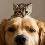 dog and cat newsletter whatsapp playdog&cat