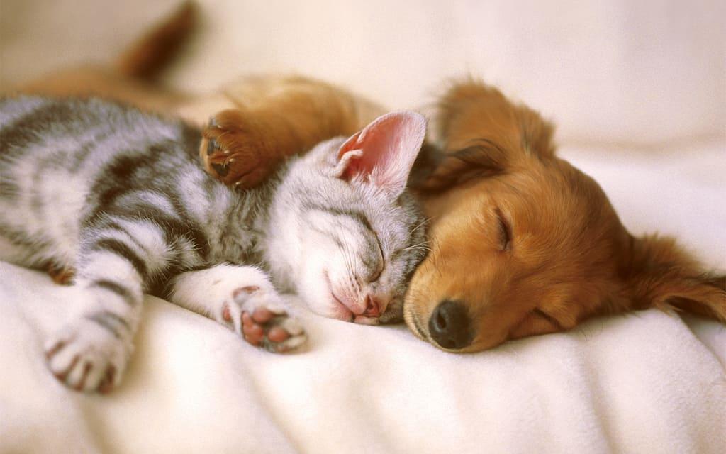 coronavirus cane e gatto