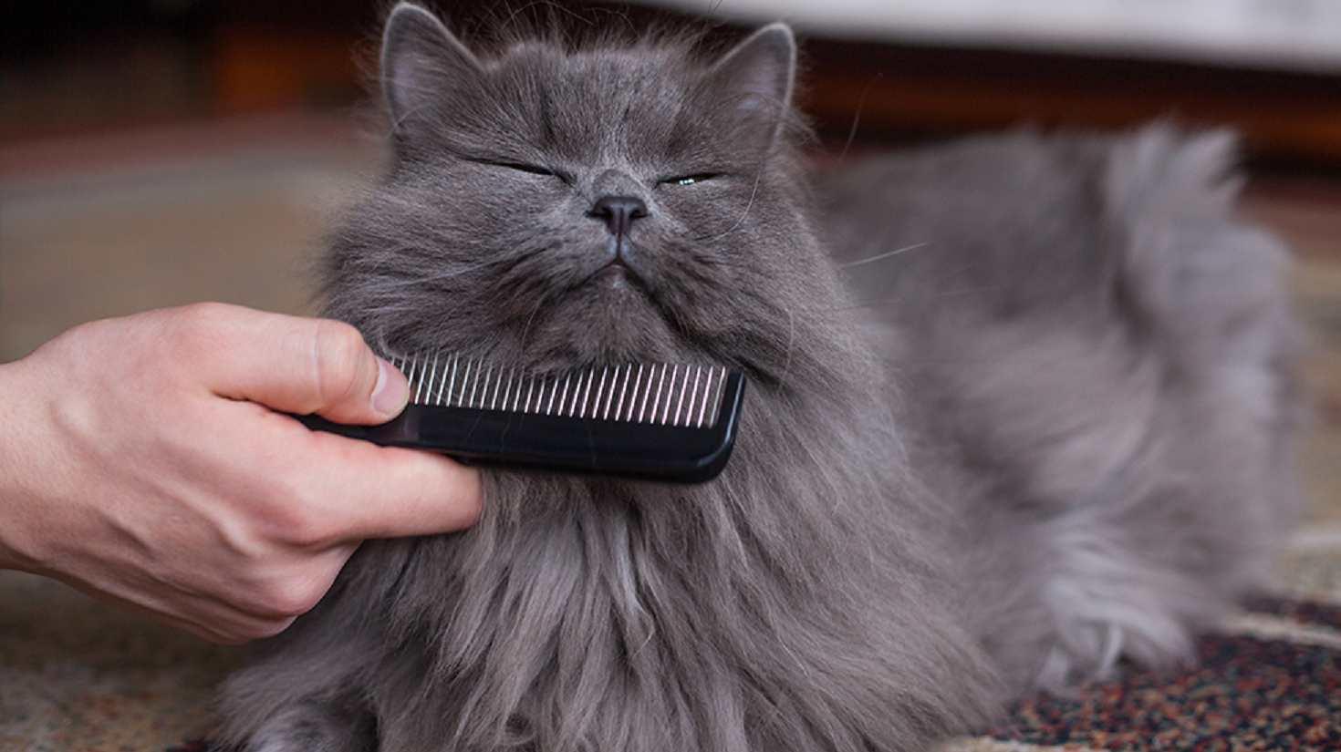 eliminare i nodi nel pelo