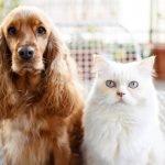 norme igieniche per cane e gatto contro il coronavirus