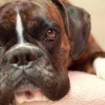 giocare con il cane 10 consigli utili