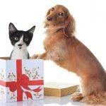 guide ai giochi per cane e gatto in regalo