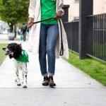 coronavirus covid-19: posso portare fuori il cane?