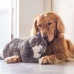 cane e gatto anziano