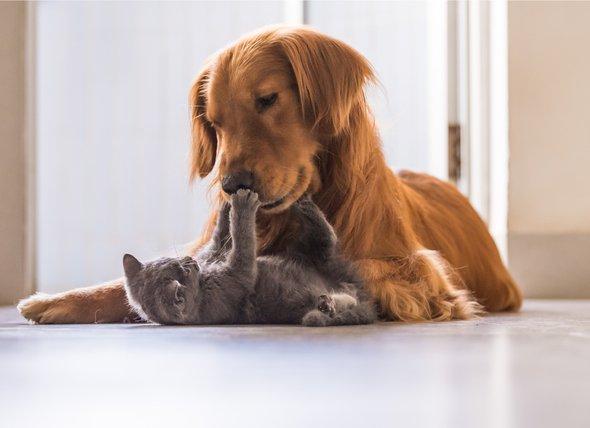convivenza tra cane e gatto