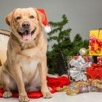 idee regalo di natale per il tuo cane